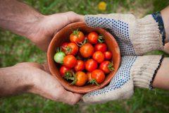 Food-for-Greater-Elgin-elaine-casap-qgHGDbbSNm8-unsplash-1536x1024-1